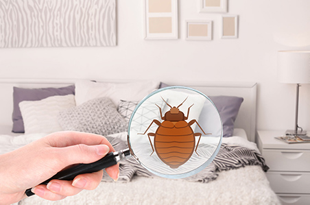 Bed Bug Exterminator in Buffalo. NY